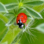 Lady Bugs: Real Food Timeline | Boholistic Mom