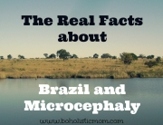 Brazil and Microcephaly | Boholistic Mom